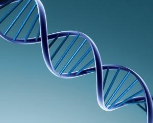 alarme ADN